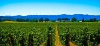 Macedonia vineyards