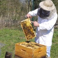 MEPs set out plan to save Europe's bees
