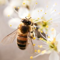 MEPs block watering down of measures to protect bees