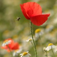 Euro-MPs call for reduction in pesticides to protect bees