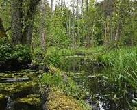 Logging in Bialowieza Forest broke law: EU Court