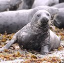 EU says ban on seal goods still in place, with exceptions