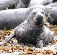 EU Parliament strengthens seal hunt ban