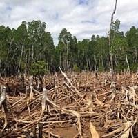 EU Parliament demands urgent action to meet 2020 goal on deforestation
