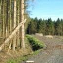 EU sets out plan to combat deforestation
