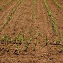 EU agrees measures to combat drought in Europe