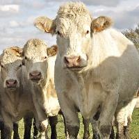Welsh cider, perry gain EU protected food status