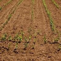Drought-hit European farmers get extra EU support