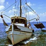 EU fish compromise to see discard ban -- by 2019