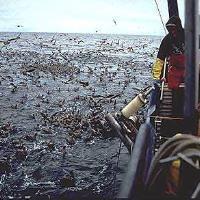 Brussels presents Atlantic and North Sea fish quotas