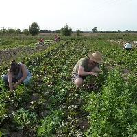 Brussels presents plan to boost organic farming