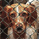 MEPs urge clamp-down on illegal trade in pets