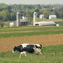 EU Farm Council ends minimum intervention price for skimmed milk powder