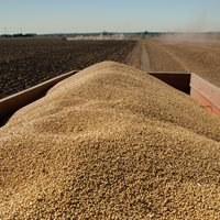 EU imports of American soybeans jump 283 pct