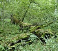 Sustainable forests: EU agrees general approach for 2021-30