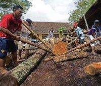 Indonesia, EU set date for start of timber licensing