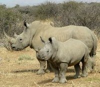 Euro-MPs urge bolder action to end illegal wildlife trade